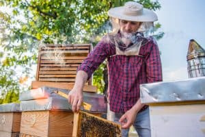 beekeeper inspected a beehive