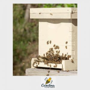 a nucleus bee colony ready to install into a full sized hive