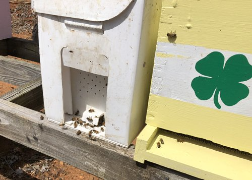 Nucleus hive in cardboard traveling box sitting beside permanent hive image.
