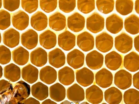 one honey bees in a large hive - sometimes bees abscond or leave the hive