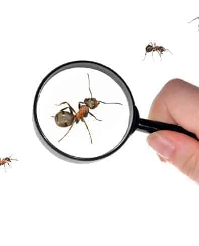 Ants - looking at ants with a magnifying glass