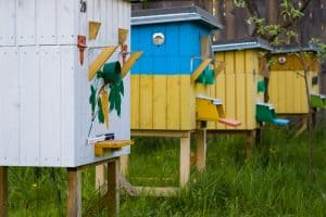 Bee hives on hive stands can help keep ants out of your beehive.