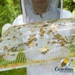 Beekeeper holding a wire queen excluder