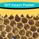 hive beetle on comb - diy insect pooter