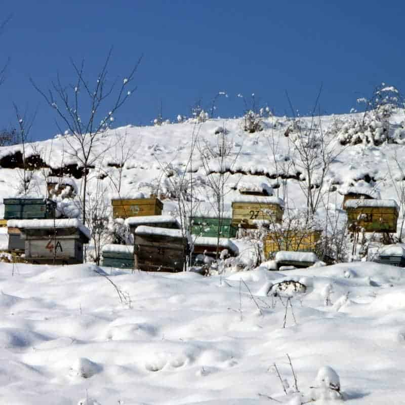 Beehives in snow - winterized and ready for Winter cold