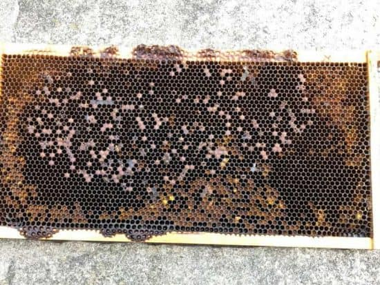 Inspections for deadout beehive pest or disease