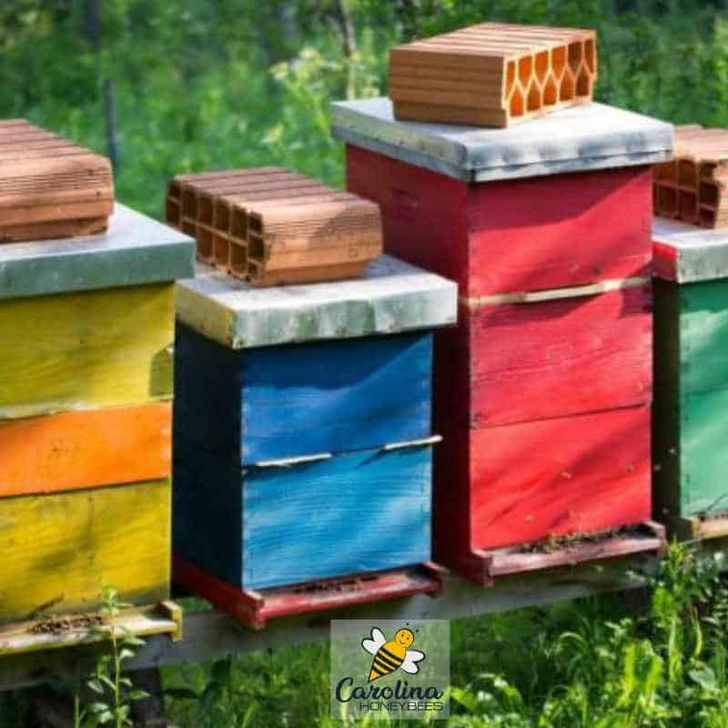 colorful hives that have been painted