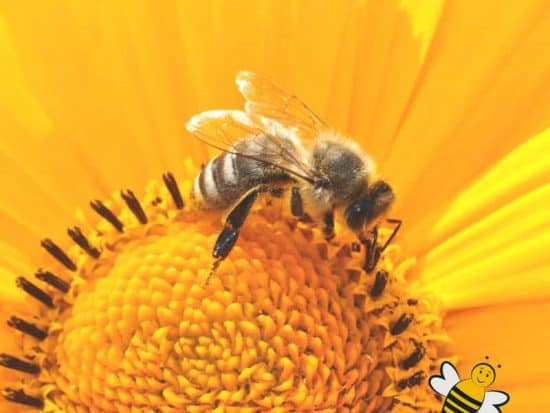 Amazing facts about honey bees