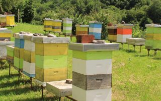 many beehives sitting in a row on a bee farm