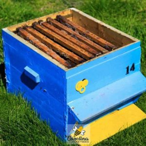 used beekeeping supplies can be a risk