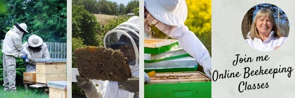 Join Master Beekeeper Charlotte for online beekeeping classes