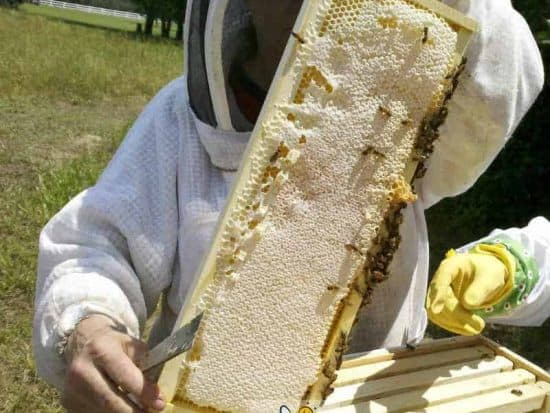 starting beekeeper inspecting first honey crop