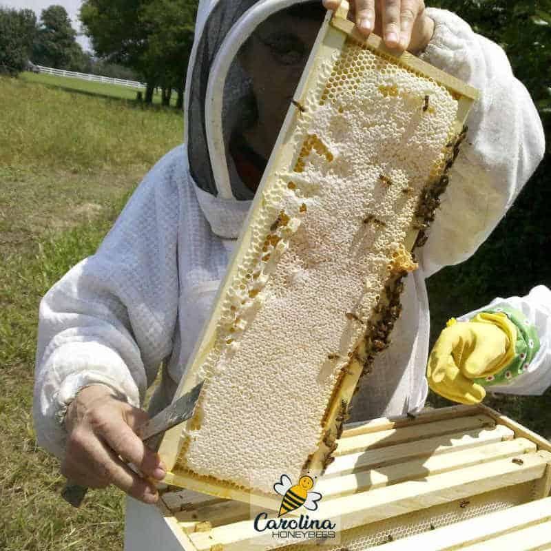 starting beekeeper inspecting first honey crop