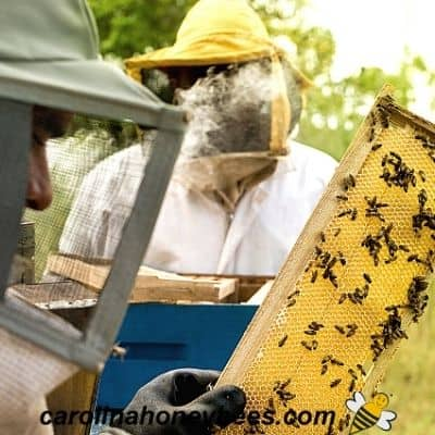beekeepers inspect a frame of bees
