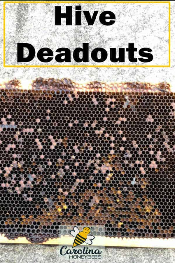 frame from a deadout hive