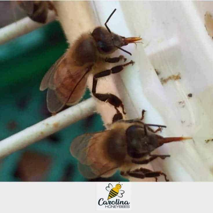 Feeding Honey Bees Sugar Water-The Right Way