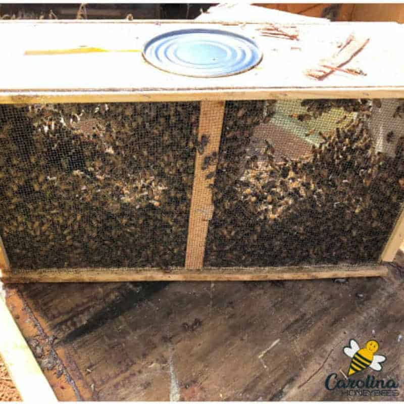 package bees inside a wooden and wire cage