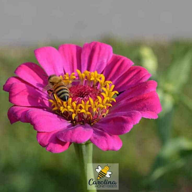 Choosing the Best Flowers For Bees