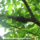 small fall bee swarm in tree