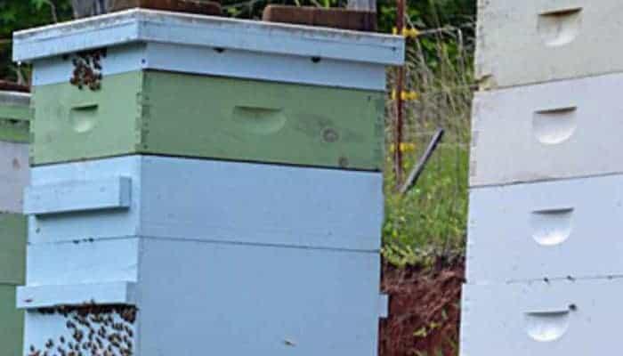 beehives why beekeeping is a good idea