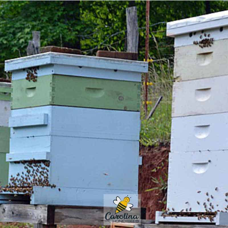 beekeeping with a couple of beehives