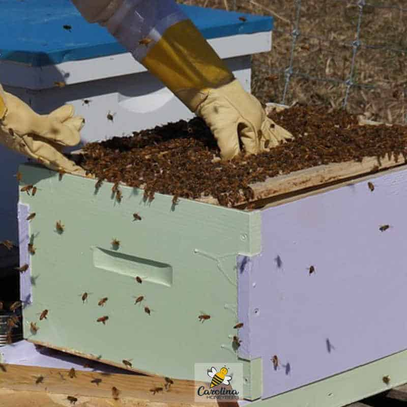 beekeepers inspecting beekeeping hive