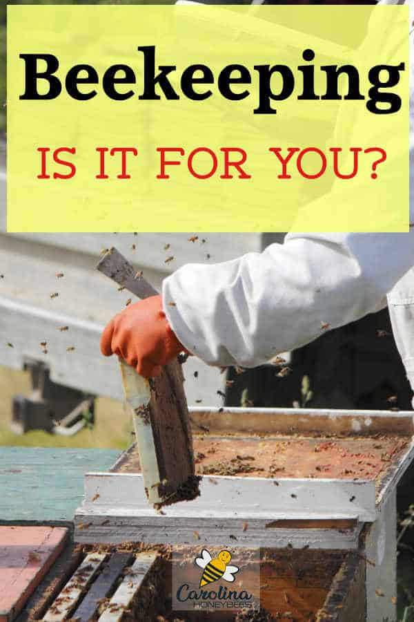 beekeeping inspecting hive - beekeeping is it for you