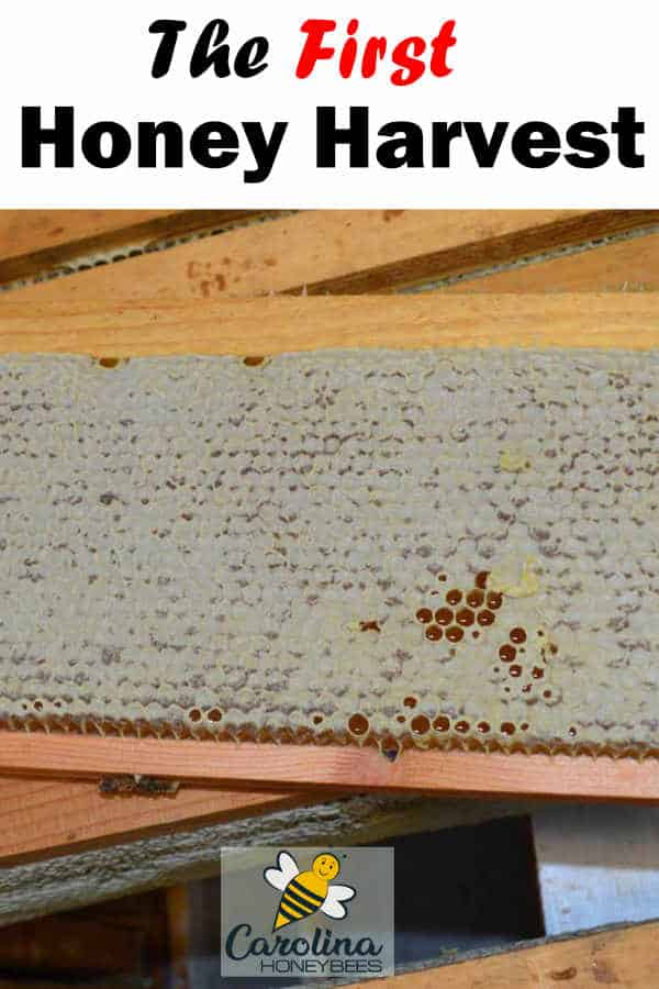 capped frame of honey ready to harvest