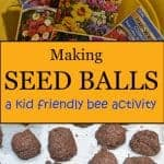 making seed balls for bees