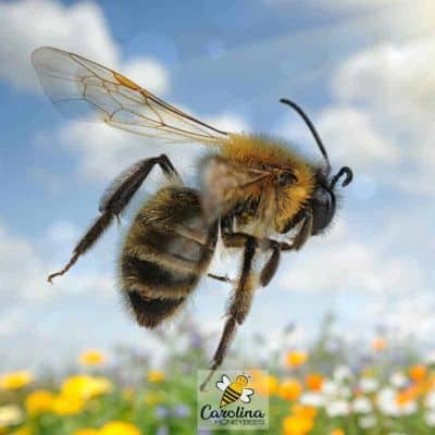 How do Bees Fly?