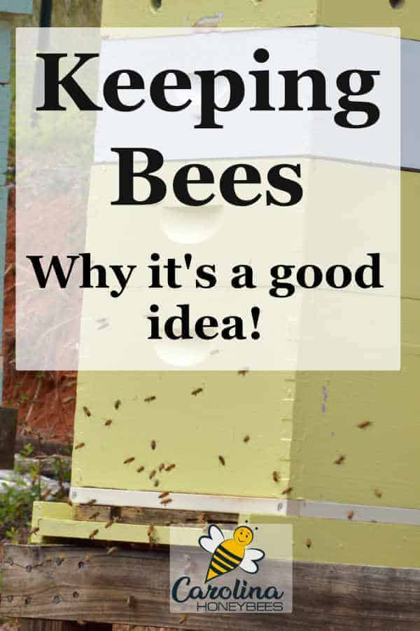 beehives - keeping bees - why its a good idea