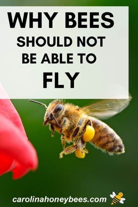 honey bee flying with pollen - why bees should not be able to fly