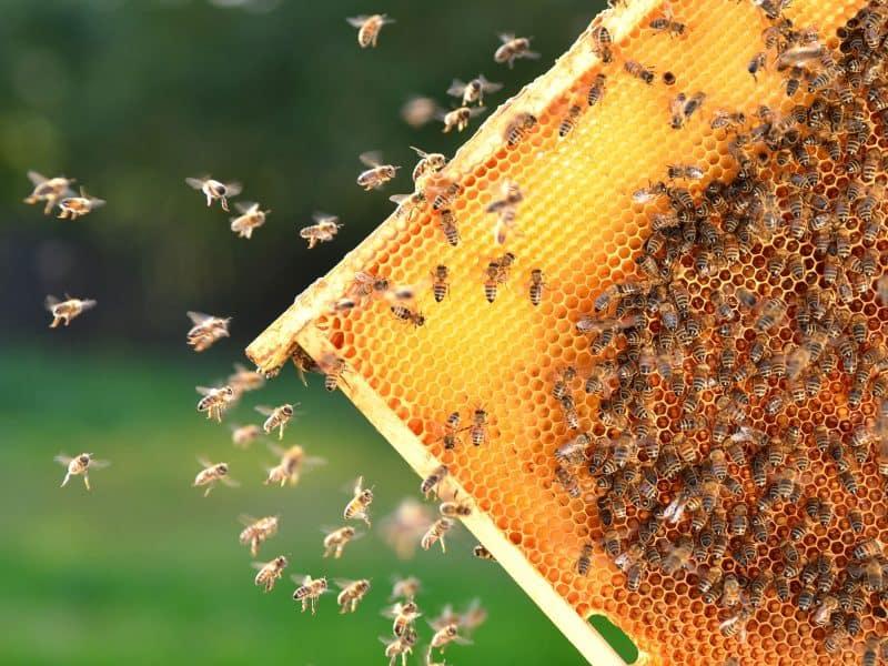 honey bees on frame banner