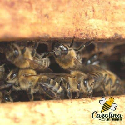 image of honey bees inside a beehive