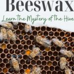 image of honey bees on comb in hive - how bees make beeswax