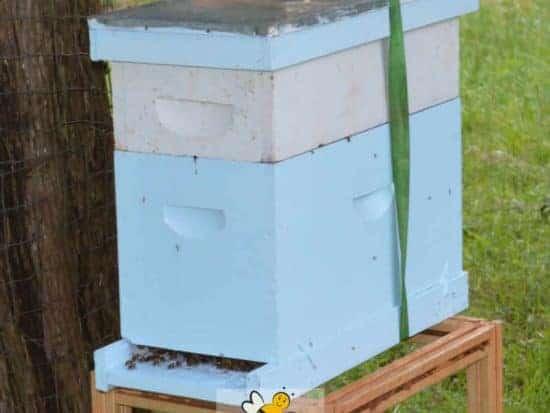 a bee nuc hive