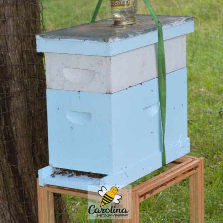 What is a Bee Nuc-Why all the Fuss?