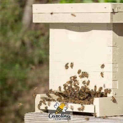 What is a Bee Nuc in Beekeeping