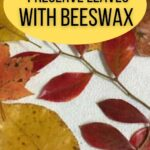image of autumn leaves coated with beeswax -how to preserve leaves with beeswax