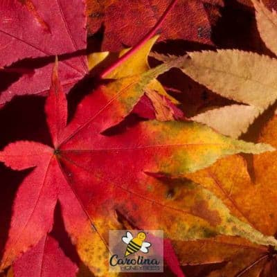 image of autumn leaves to preserve