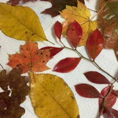 How to Preserve Leaves with Beeswax