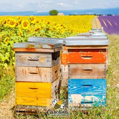 Colorful beehives in a field of crops managed by beekeeper for pollination image.