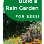 picture of bee flowers on a slope - how to build a rain garden for bees