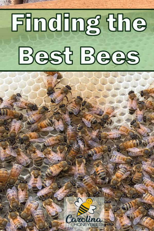 honey bees on new comb - finding the best bees
