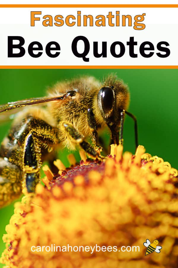 honey bee on flower - fascinating bee quotes