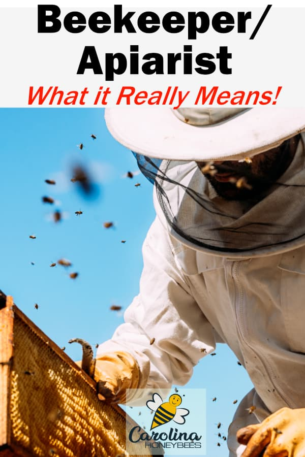 beekeeper/apiarist what it really means - beekeeper in white suit inspecting beehive