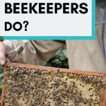 picture of a beekeeper holding a frame from a beehive - what does a beekeeper do