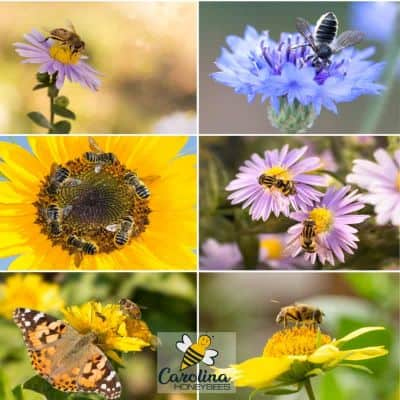 picture of different types of bees in ecosystem