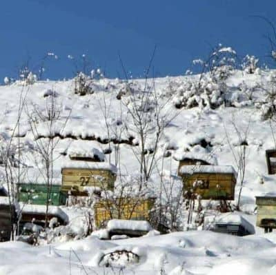 beehives die in winter cold