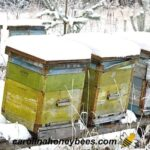 winter beekeeping hives in snow